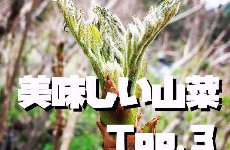 【初心者必見】美味しい山菜TOP.3の採り方とおすすめ料理を紹介します