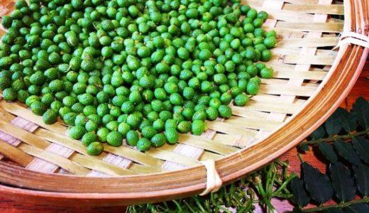 【山椒の実】ピリ辛で美味しい♪山椒の実の下処理方法について解説します。