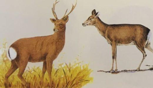 【免許】狩猟をするなら「猟銃」と「わな猟」2種類の同時取得をおすすめします。