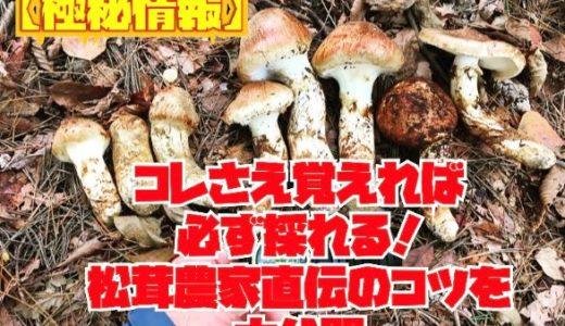 【松茸農家が直伝】松茸の採り方のコツやポイントを10項目で大公開するブログ。