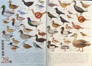 狩猟鳥獣②