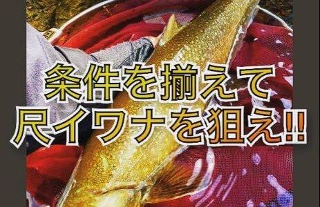 【尺イワナの釣り方】上手い人は知っている3つの条件を解説します。