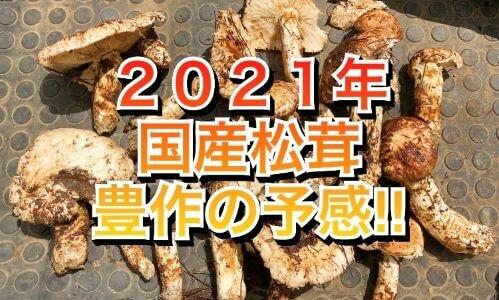 【長野県産】2021年は豊作の予感⁉国産松茸が豊作になる3つのポイント