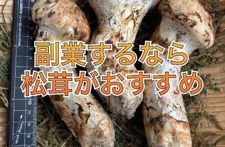 簡単に副業するなら松茸がおすすめ|理由と方法について解説します。
