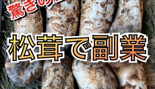 【副業】いくら稼げる?11万円で松茸山を落札!結果は驚きの売上金額に⁉